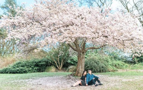 Queen Elizabeth Park Sunset Cherry Blossoms Engagement | Vivi & Eric
